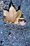 Nature in autumn, Altai territory, Western Siberia, Russia Royalty Free Stock Image