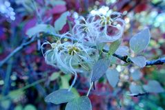 Nature in autumn, Altai territory, Western Siberia, Russia Royalty Free Stock Photos