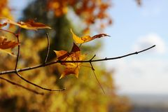 Nature in autumn, Altai territory, Western Siberia, Russia Royalty Free Stock Photo