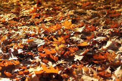 Nature autumn background with dry fallen leaves Stock Photos
