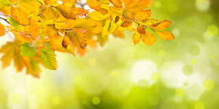 Nature autumn background Royalty Free Stock Photos