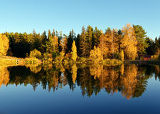 Autumn forest and lake in the fall season Royalty Free Stock Images