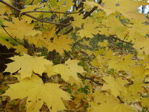 Nature,autumn forest, leaves, trees Stock Images