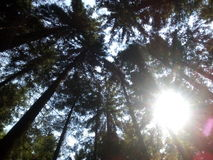 Nature Autumn Forest Tall Trees trail . Green Sunlight Wood. Nature forest tall trees trail Royalty Free Stock Photos