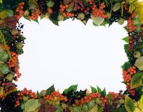 Nature autumn frame (fall fruits and leaves) Stock Image