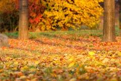 Nature, Autumn, Leaf, Deciduous