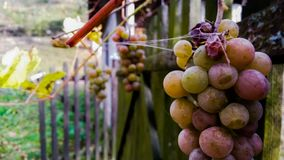 Nature autumn lovely october fruit stock photography