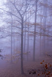 Nature Autumn Misty Forest Landscape. T europe Germany Royalty Free Stock Photo