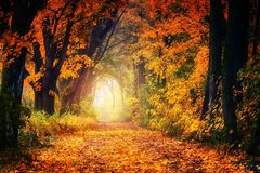 Nature, Autumn, Woodland, Leaf stock photography