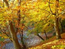 Nature, Autumn, Woodland, Tree stock images