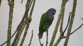Nature ave parrot fauna. Video of nature ave parrot fauna stock video footage