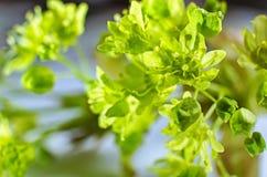 Nature is awakening Royalty Free Stock Photos