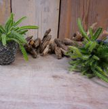 Nature backdrop isolated on wooden background stock photos