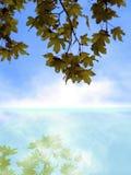 Nature background stock photo