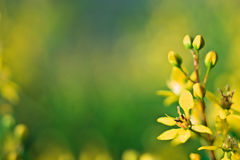 Nature background. Yellow flowers on nature background Royalty Free Stock Photo