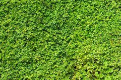 Nature background. A lot of leafes Stock Photo