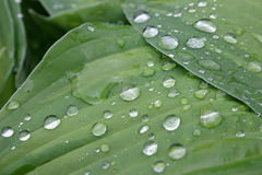 Nature background. Dripped grow and rain on green slip Stock Photos
