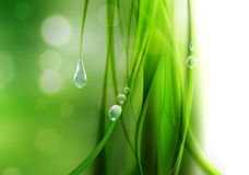 Nature background. Abstract nature background with drops of dew Stock Photo