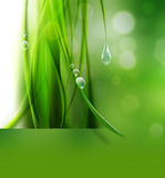 Nature background. Abstract nature background with drops of dew Royalty Free Stock Images