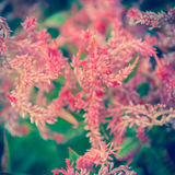 Nature background. An abstract background of a wild flowers. Out of focus background treatment royalty free stock photos