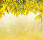 Nature background with autumn foliage and bokeh Stock Photo
