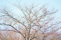 Nature background of bare winter leafless tree. In horizontal frame stock photo