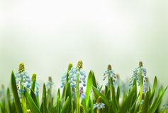 Nature background, beautiful spring flower Royalty Free Stock Images