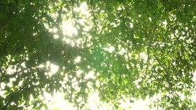 Nature background. Beautiful Sun shine through the blowing on green leaves.