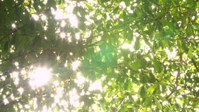 Nature background. Beautiful Sun shine through the blowing on green leaves. stock footage
