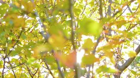 Nature background. Beautiful Sun shine through the blowing on wind tree green leaves. Blurred abstract bokeh with sun. Flare. Sunlight. Sunflare stock video footage