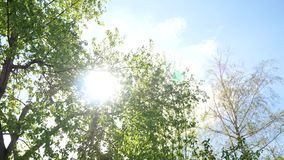 Nature background. Beautiful sun shine through the blowing on wind tree green leaves.  stock footage