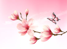 Nature background with blossom branch of pink flowers Royalty Free Stock Photos