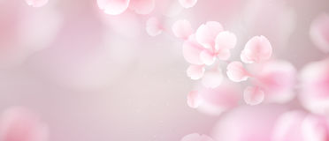 Nature background with blossom branch of pink flowers. Nature background with blossom branch of pink sakura flowers. Vector template isolated on white royalty free illustration