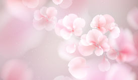 Nature background with blossom branch of pink flowers. Royalty Free Stock Photos