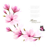 Nature background with blossom branch of pink magnolia  Stock Photos