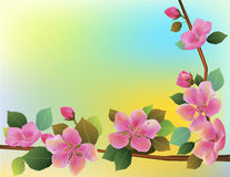 Nature background with blossom branch of pink sakura flowers. Royalty Free Stock Photography
