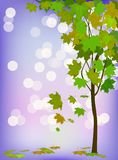 Vector illustration of seasons, tree in summer. Postcard, banner. Stock Images