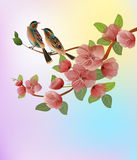 Nature background with blossom branch of pink sakura flowers. Royalty Free Stock Photos