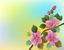 Nature background with blossom branch of pink sakura flowers. Stock Images