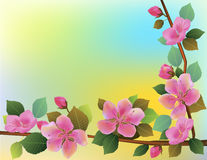 Nature background with blossom branch of pink sakura flowers. Royalty Free Stock Photo