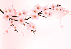 Nature background with blossoming sakura branch. Royalty Free Stock Photo