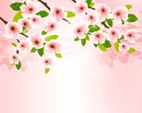 Nature background with blossoming sakura brunch. Stock Photos