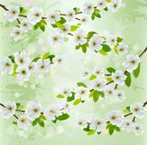 Nature background with blossoming tree branches. Vector illustration Royalty Free Stock Photography