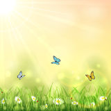 Nature background with butterflies Stock Images