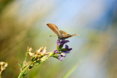 Nature background with butterfly Royalty Free Stock Image