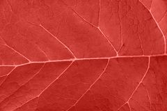 Nature Background. Close up of Fresh Leaf Surface with Texture in trendy Living coral color. Wallpaper Poster Template. Organic Cosmetics Wellness Spa Fashion royalty free stock photos