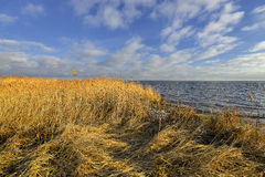 Nature background with coastal reed and shining lake water Stock Photo