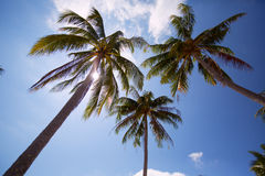 Nature background of coconut palm tree on tropical beach blue sky with sunlight of morning in summer Stock Photos