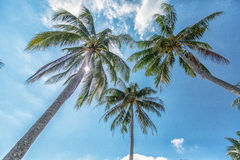 Nature background of coconut palm tree on tropical beach blue sky with sunlight of morning in summer Royalty Free Stock Photography