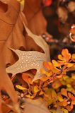 Colorful autumn trees and dried leaves with dew Royalty Free Stock Photo